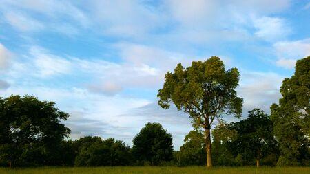 A tree illuminated by the morning sun