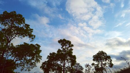 Early morning sky and trees