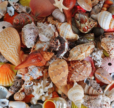 cone shell: A beautiful alluvial of different seashells Stock Photo