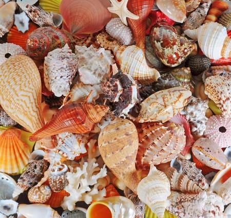 alluvial: A beautiful alluvial of different seashells Stock Photo