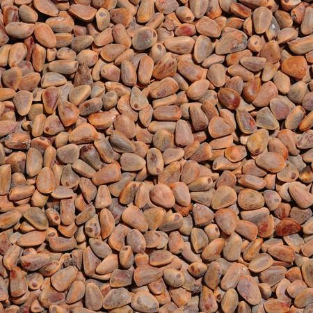 Textured background of many cedar nut photo