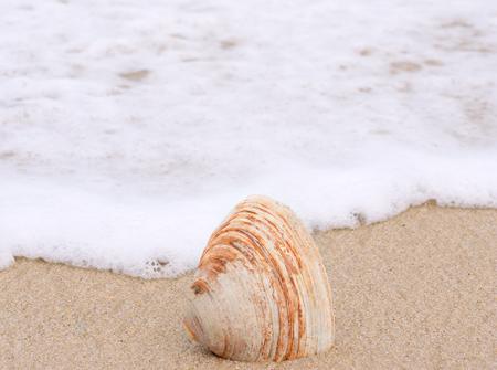 ocean waves: Seashell in ocean waves Stock Photo