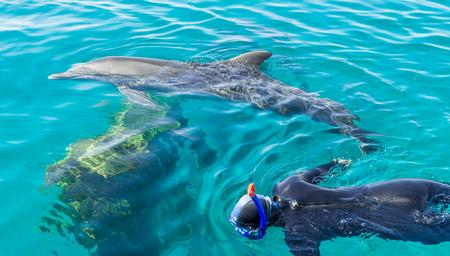 delfin: Osoba nurkowanie z delfinami w tropikalnym kurorcie