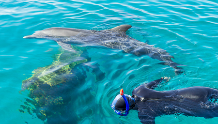 Person snorkeling with dolphins at tropical resort photo