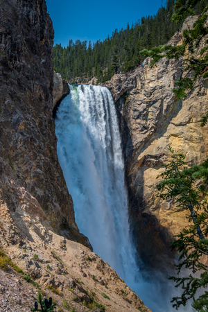 lower yellowstone falls: Lower falls of Yellowstone Canyon - landmark of Yellowstone National park