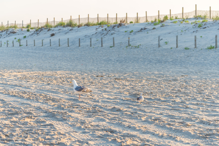 Seagull birds at sandy beach