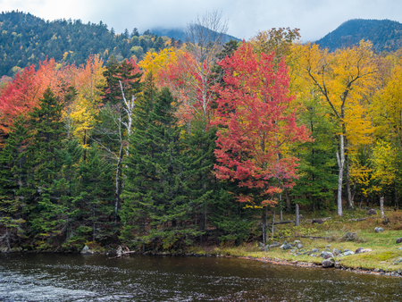 Colorful fall forest in Adirondack Mountains Banco de Imagens