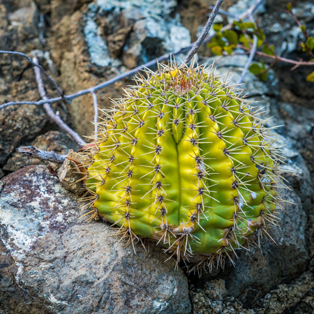 Close-up picture of cactus in the desert