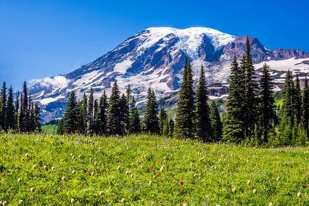 Wildflowers at Mount Rainier National Park Reklamní fotografie