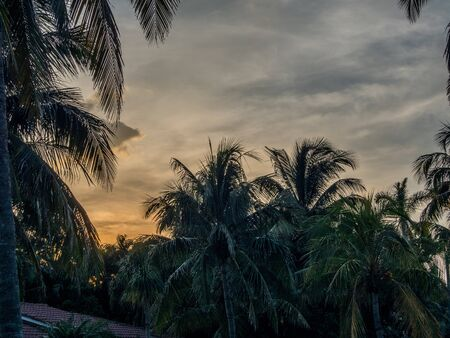 Sunset and palm trees in Florida