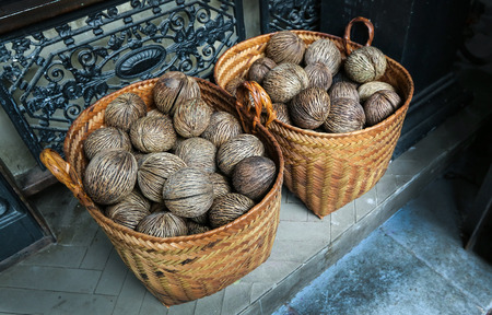 cerebra: dry Cerbera oddloams seed with basket ( Pong-pong, Othalanga, suicide tree )