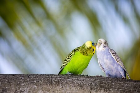 animal, background, birds, budgerigar, decoration, eyes, food, for, foraging, head, illustrations, local, parrots, woods