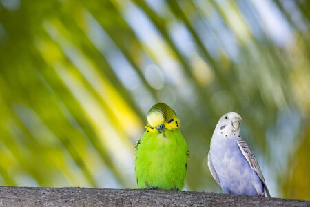animal eyes: animal, background, birds, budgerigar, decoration, eyes, food, for, foraging, head, illustrations, local, parrots, woods