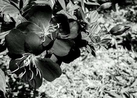 bright: Flower