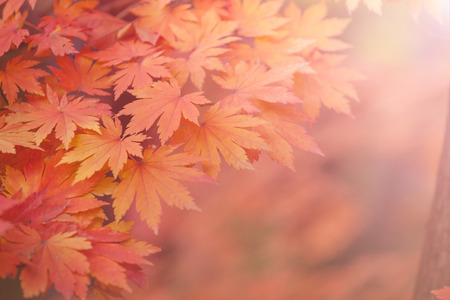 colored background: autumn background Stock Photo
