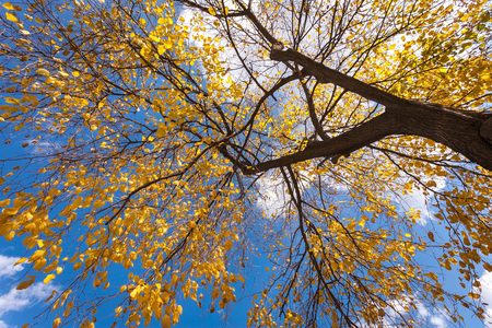 Autumn tree with blue sky. Seoul,South korea.