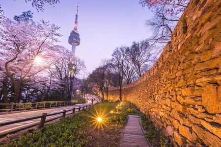 seoul tower in seoul city at night view in spring with cherry blossom tree, south korea.