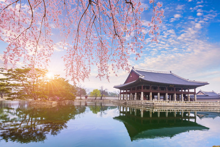 old architecture: gyeongbokgung palace with cherry blossom tree in spring time in seoul city of korea, south korea. Stock Photo