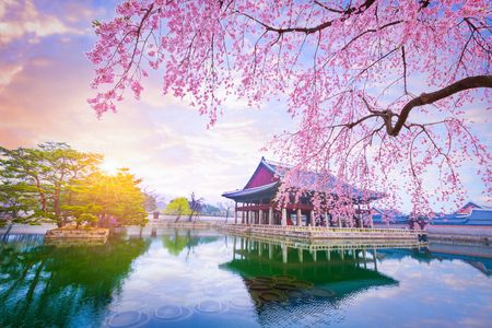 Gyeongbokgung palace with cherry blossom tree in spring time in seoul city of korea, south korea. Редакционное