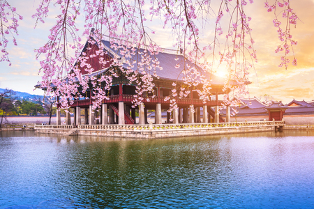 Gyeongbokgung palace with cherry blossom tree in spring time in seoul city of korea, south korea. Reklamní fotografie
