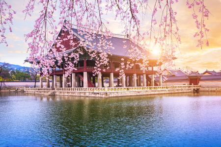 Pałac Gyeongbokgung z wiśniowym drzewem wiosną w seulu w korei, korea południowa. Zdjęcie Seryjne