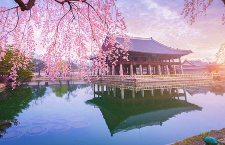 Palais de Gyeongbokgung avec cerisier en fleurs au printemps dans la ville de Séoul en Corée, Corée du Sud.