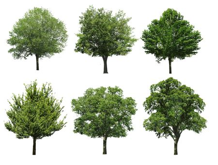 Collection tree isolated on white background photo