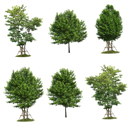 Collection tree, plant isolated on white background