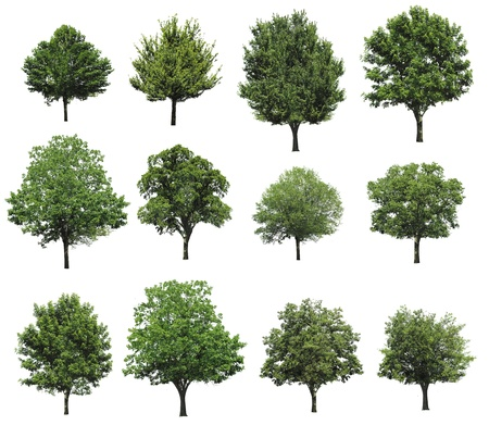 Collection plant isolated on white background Imagens - 16386120