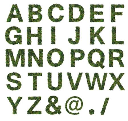 Tree Alphabet set Imagens - 16544987