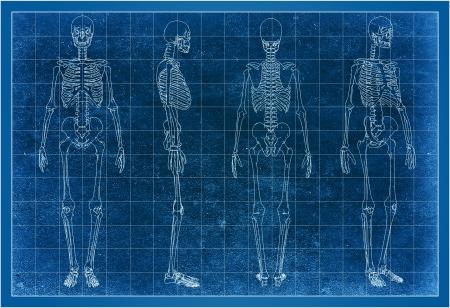 3d wireframe of skeleton Stock Photo - 16545000