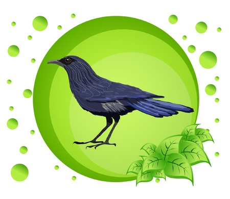 Vector illustration of a bird on colorful background Stock Vector - 17102906