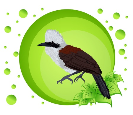 Vector illustration of a bird on colorful background Stock Vector - 17102905