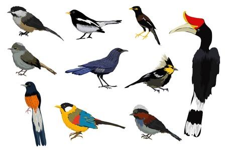 usignolo: Illustrazione vettoriale di una collezione di uccelli colorati Vettoriali