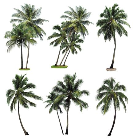 Collection palm tree isolated on white background  photo