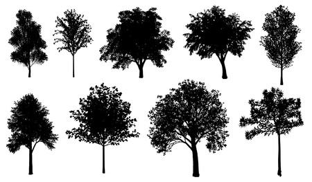 Set of Tree Silhouettes  photo