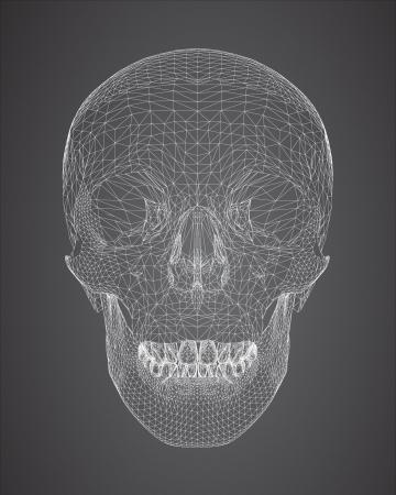 3d skull wireframe