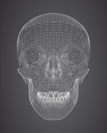 viewport: 3d skull wireframe
