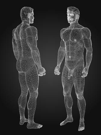 anatomia humana: 3d rindi� la ilustraci�n de alambre - m�sculos masculinos