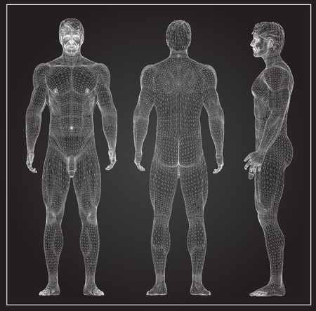 anatomy body: 3d rendered wireframe illustration - male muscles