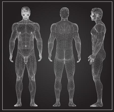 3d rendu filaire illustration - muscles masculins