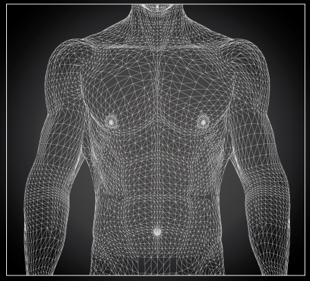 human bodies: 3d rendered wireframe illustration - male muscles
