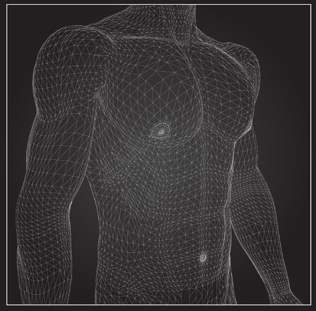 body structure: 3d rendered wireframe illustration - male muscles