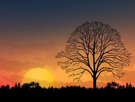 sycamore: Beautiful landscape image with trees silhouette at sunset