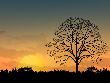 dead trees: Beautiful landscape image with trees silhouette at sunset