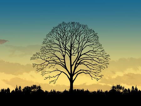 arboles secos: La imagen Hermoso paisaje con ?rboles silueta al atardecer Foto de archivo