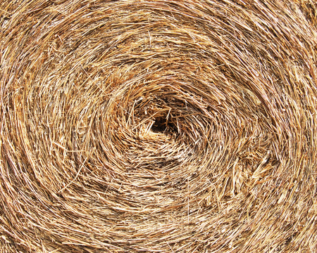 thatch: thatch, Close up straw    Stock Photo