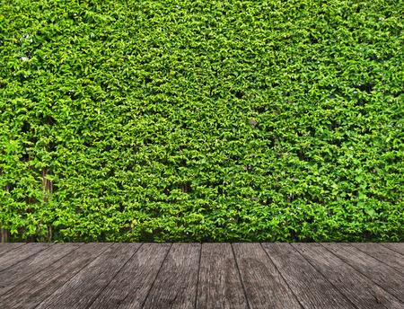 Wood terrace with Green landscape Reklamní fotografie