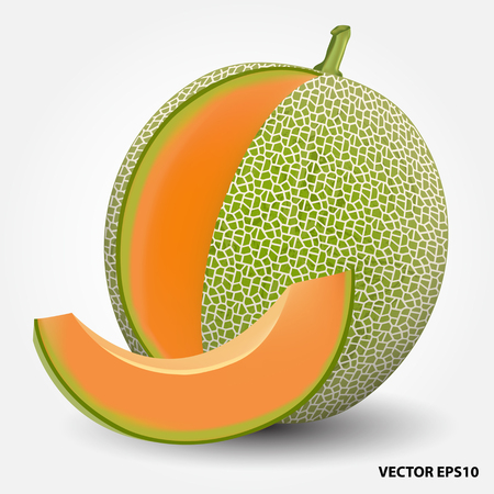 cantaloupe melon.vector illustration