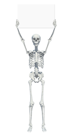 A skeleton standing casually and holding a sign on a white background .may use as halloween background